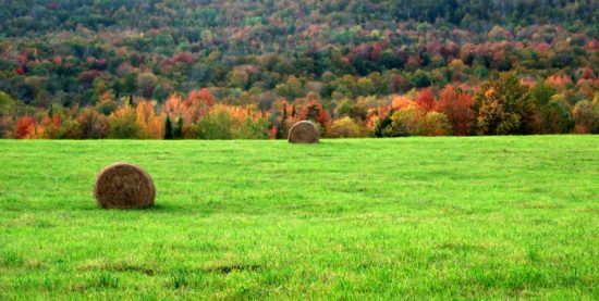 Vermont's rolling hills and grass
