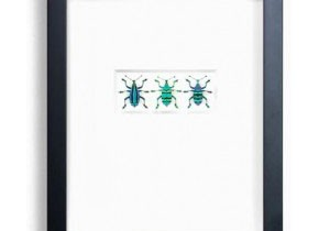 Behind the Scenes with Insect Artist Christopher Marley